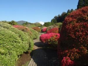 2012.5.11庭園奥まで進みますとピンク、赤のツツジがキレイにご覧いただけます。