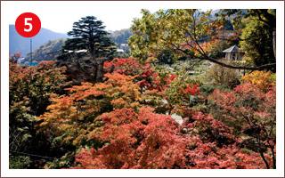 (5)強羅公園
