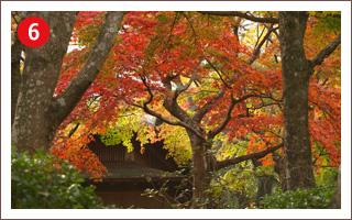 (6)箱根美術館