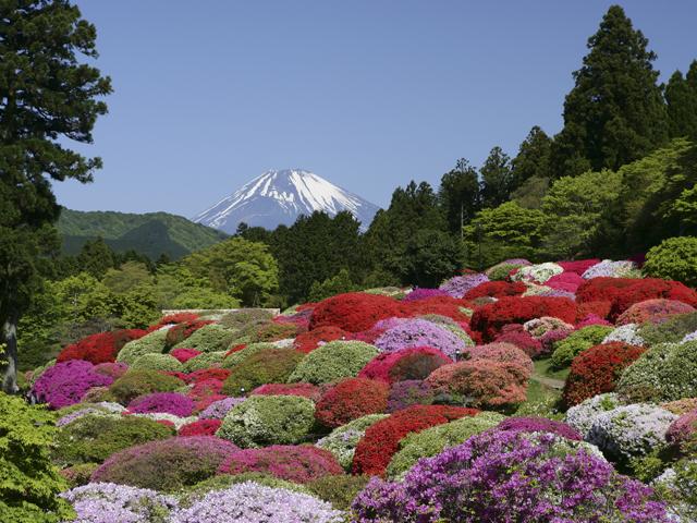 庭園に咲くツツジと富士山
