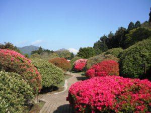 世界文化遺産としての条件付きの登録を勧告された富士山と一緒にツツジの花もご覧ください