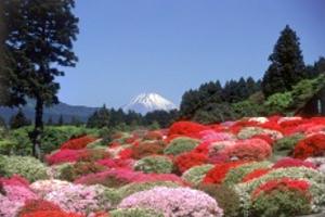 ツツジ庭園から「富士山」を望む