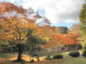 庭園の色とりどりの紅葉