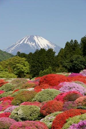 2015年のツツジ庭園と富士山