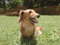 小型犬専用ドッグラン(イメージ)