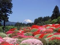 富士山とツツジ庭園