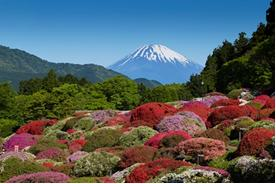 ツツジ庭園と富士山