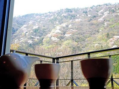 客室から見た湯坂山の山桜