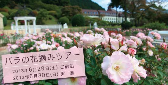 バラ摘みツアー【2013年6月29日(土)ご宿泊、6月30日(日)実施】