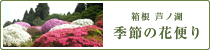 箱根 芦ノ湖 季節の花便り